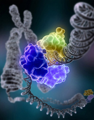 The DNA Damage Response as a Target for Anti-Cancer Therapy