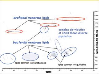Molecular Biogeochemistry