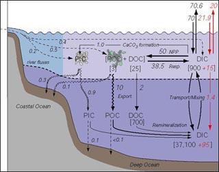 Marine Organic Geochemistry