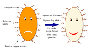 Sophisticated Survival Skills of Simple Microorganisms