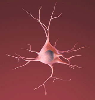 Cellular Neurobiology
