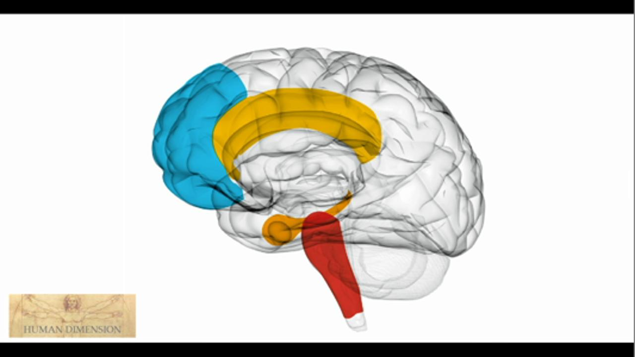Neuroscience for Managers: Make your team mentally agile