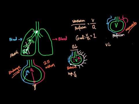 Pulmonary Diseases