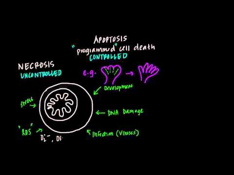 Krebs (citric acid) cycle and oxidative phosphorylation