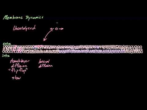 Cell membrane overview