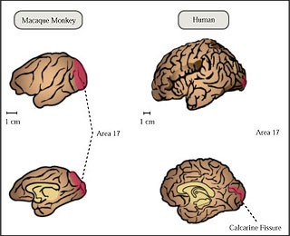 Introduction to Neuroscience