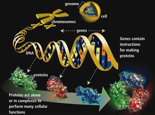 Statistical Thermodynamics of Biomolecular Systems (BE.011J)