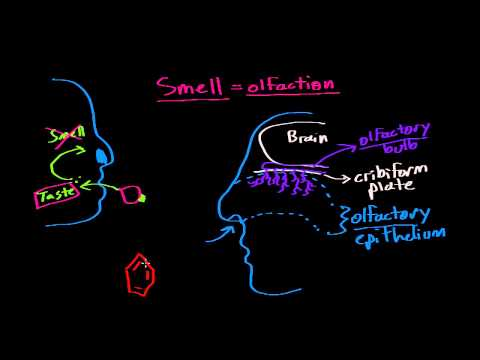 Taste (gustation) and smell (olfaction)