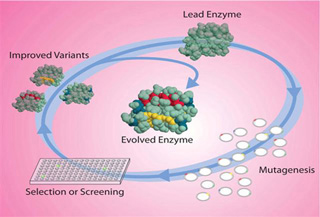 Directed Evolution: Engineering Biocatalysts