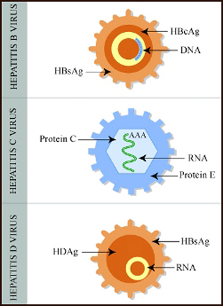 Molecular and Cellular Pathophysiology (BE.450)